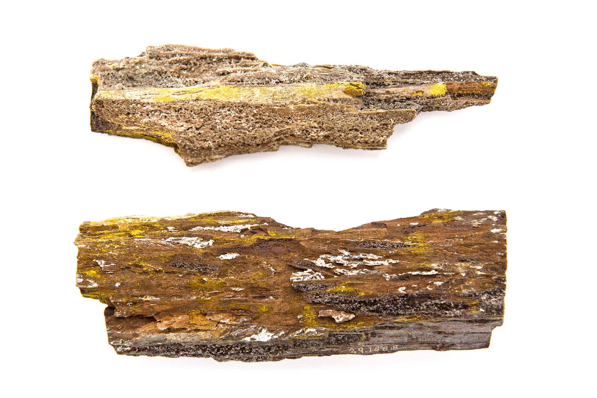 dating petrified wood