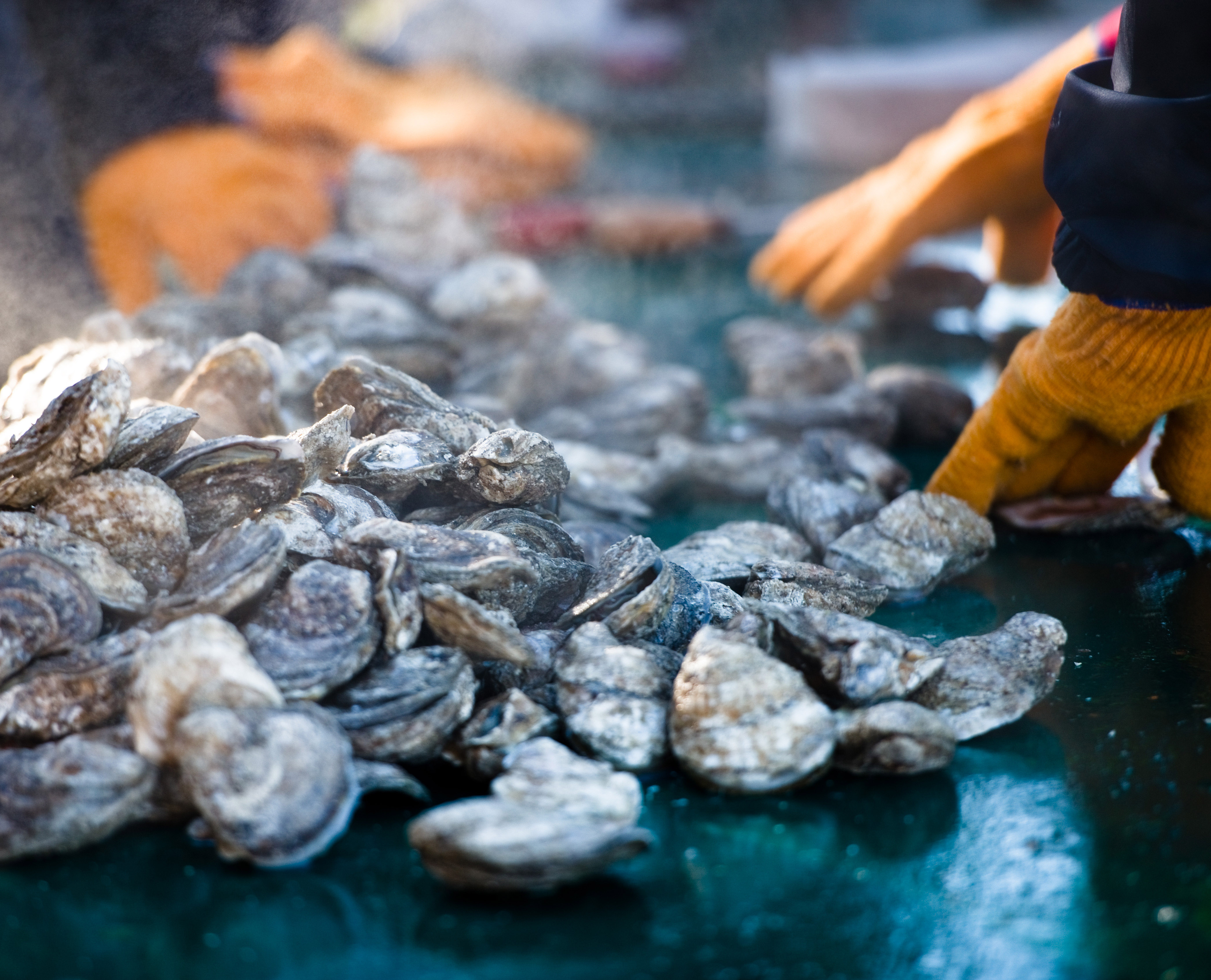 2020 Annual Oyster Roast at the Dill Sanctuary