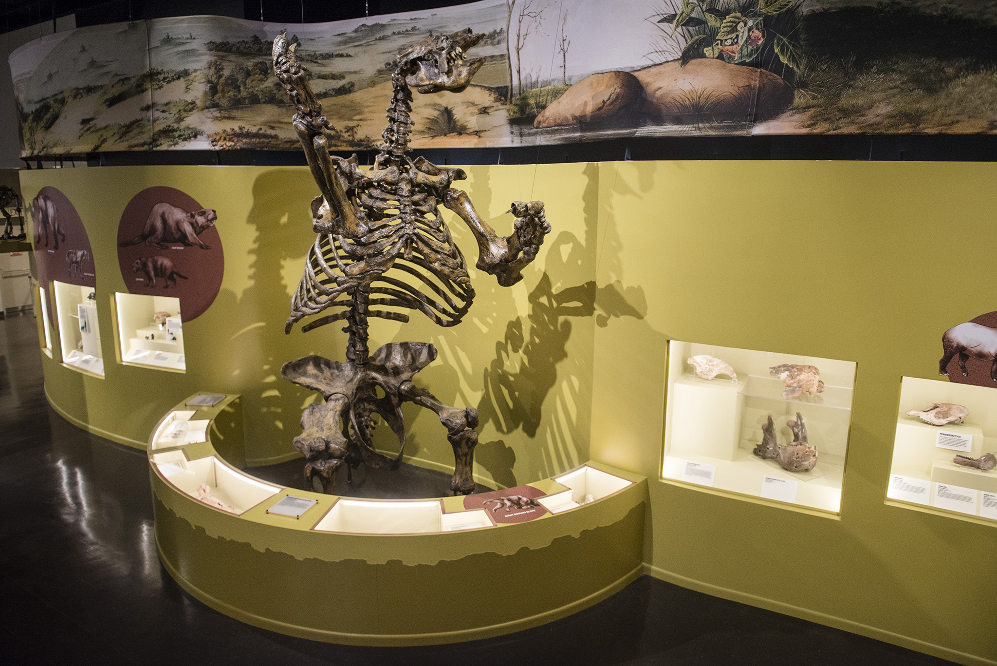 Conversations with a Curator: Ice Age with Curator of Natural History Matthew Gibson