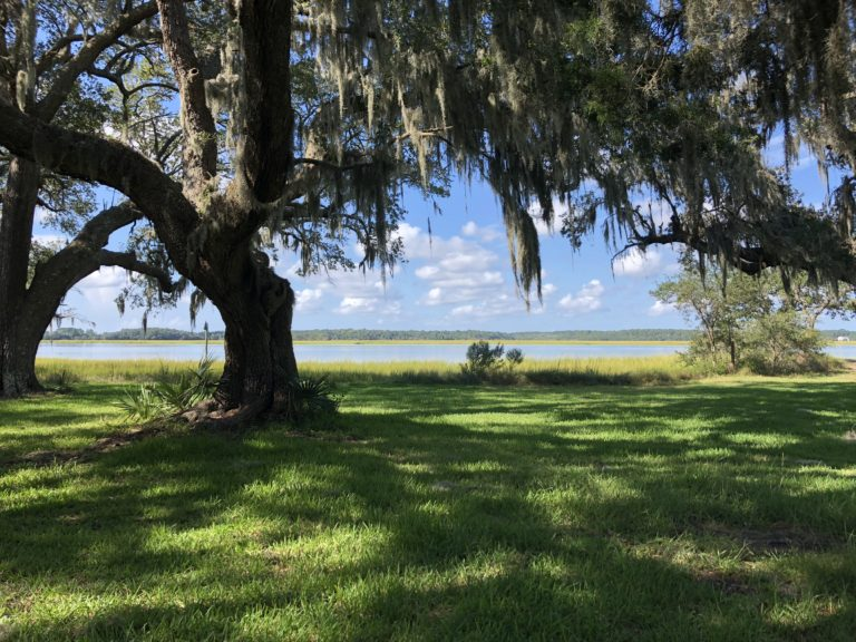 Lowcountry Ecology Tour with Curator of Natural History Matthew Gibson
