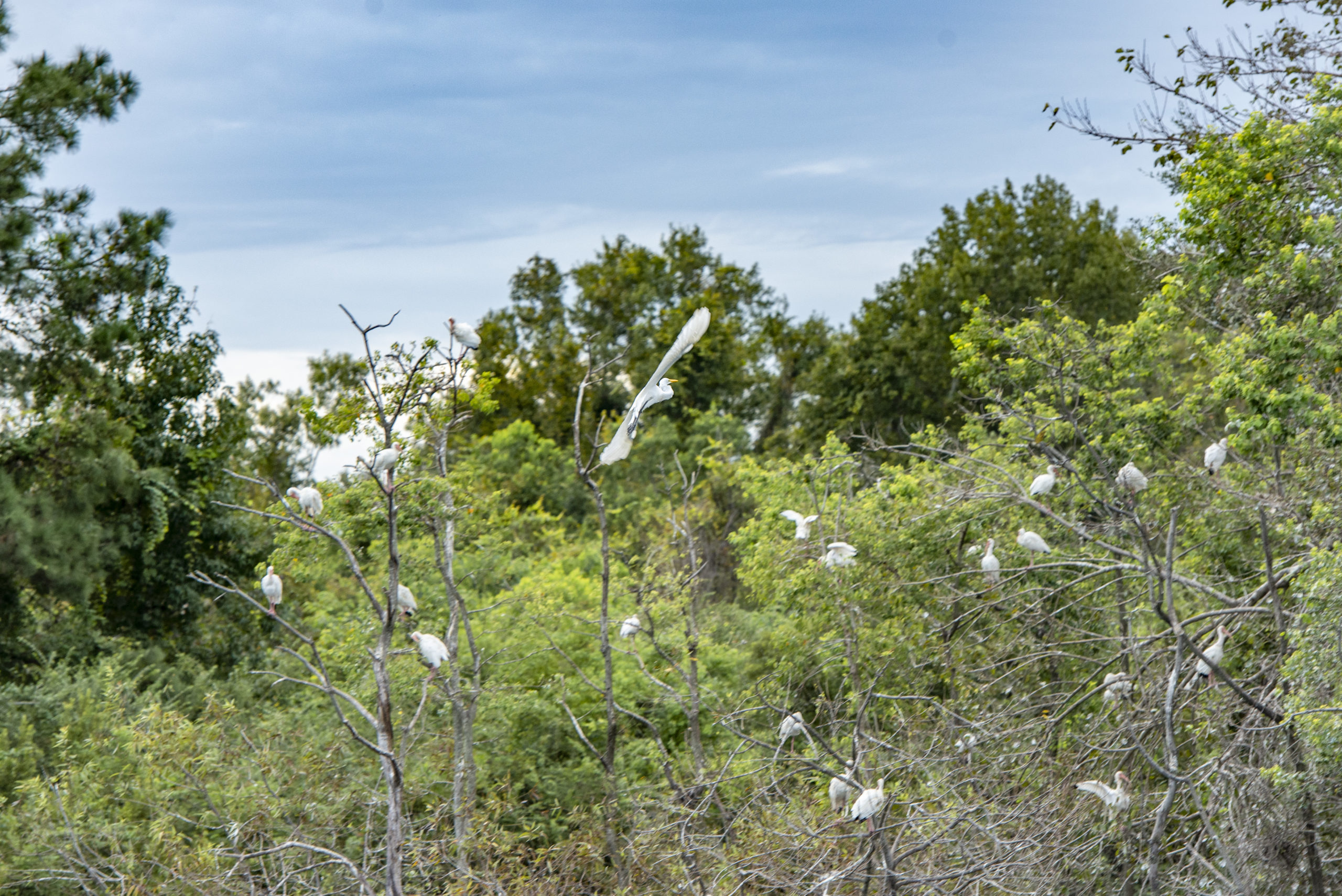 Birding Day at the Dill Sanctuary