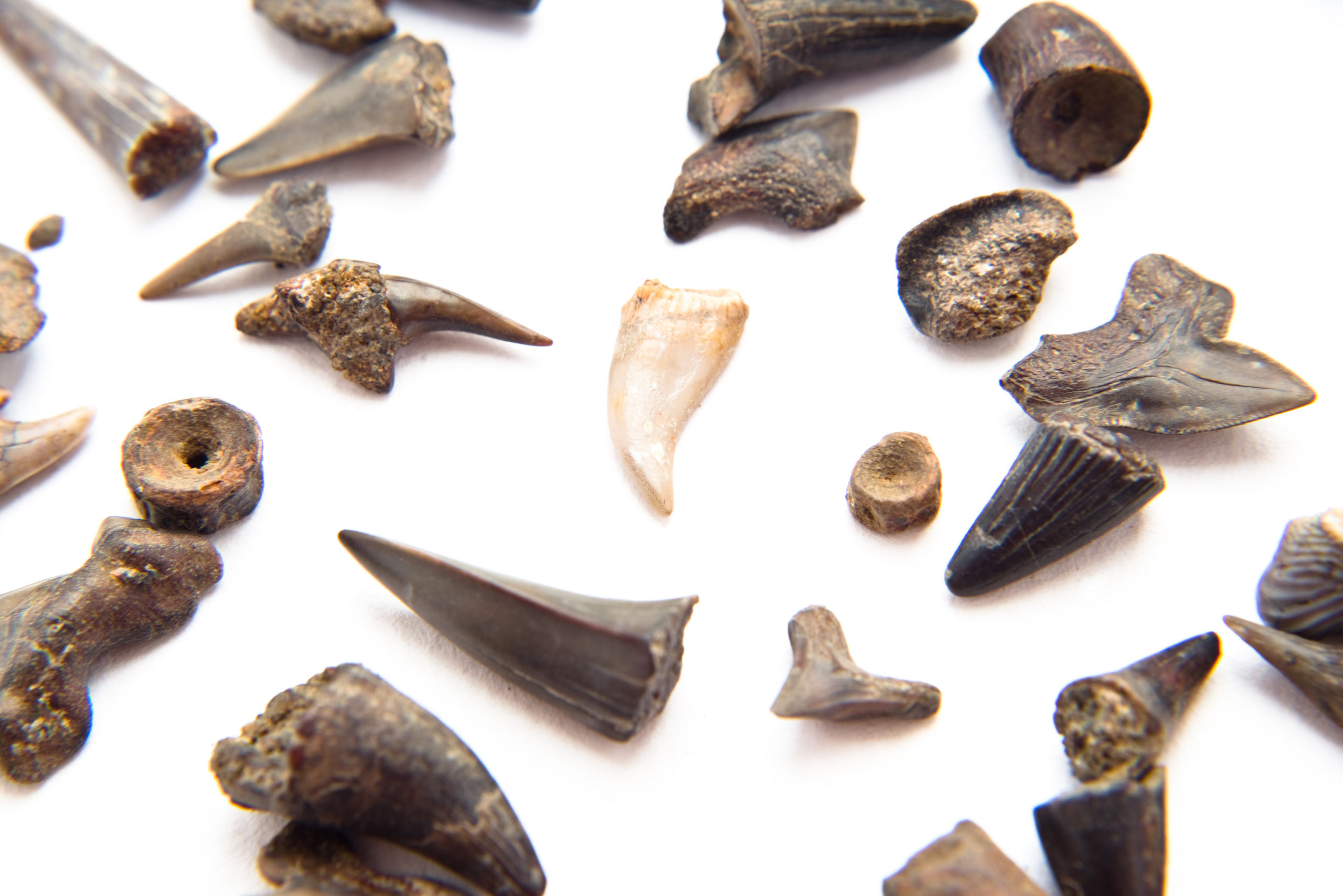 Curator Talk: Beachcombing with Curator of Natural History Matthew Gibson