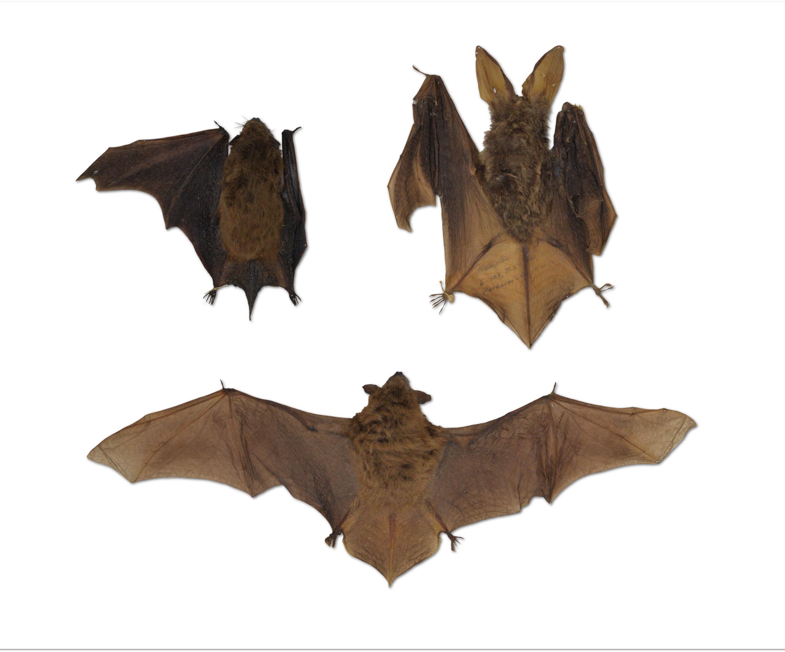 Kid Tours: Bats